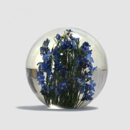 Hafod Grange / Paper Weight (Forget Me Not)